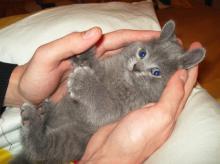 14 მტკიცებულება იმისა, რომ კატები გასაოცარი არსებები არიან ( 14 ფოტო)