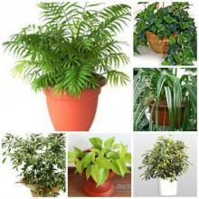 ჯანმრთელობისთვის აუცილებელი 7 მცენარე, რომლებიც თითოეულ ოჯახში უნდა იზრდებოდეს