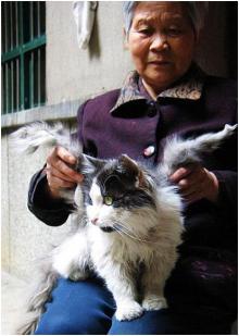 ფრთიანი კატები