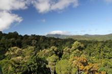 ტყე, რომელიც 150 მილიონი წლისაა
