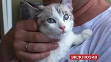 """კატა რომელიც მე-19 სართულიდან გადმოვარდა და გადარჩა,სახელად """"Су-34"""" შეარქვეს(ვიდეო)"""