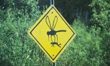 რატომ კბენენ კოღოები მხოლოდ  ზოგ ადამიანს და  ზოგს  - არა?