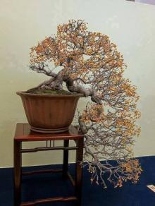 ჯუჯა ხე