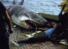 დაუჯერებელი ამბავი: ზვიგენმა მამაკაცს კიდური მოაწყვიტა, მსხვერპლმა კი ამავე კიდურით თავმდამსხმელი მოკლა