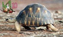 დედამიწაზე ყველაზე ხანდაზმული ორგანიზმების  TOP -10 (188 წლის ასაკიდან - უკვდავებამდე)