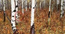 ჩერნობილის ტყეში მეცნიერების მიერ აღმოჩენილი ცოცხალი არსებები,რომელმაც მთელი მსოფლიო შოკში ჩააგდო
