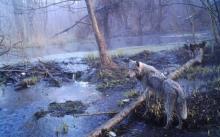 ის რაც მეცნიერებმა ჩერნობილის ტყეში აღმოაჩინეს  გააოცა მთელი მსოფლიო
