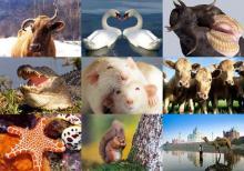 100 საინტერესო ფაქტი ცხოველების შესახებ