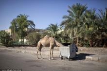 """– """"გაიყინა არაბული გაზაფხული"""" - როგორ გამოიყურება შარმ ელ - შეიხის სანაპირო და როგორია დღეს ეგვიპტის ეკონომიკა?"""