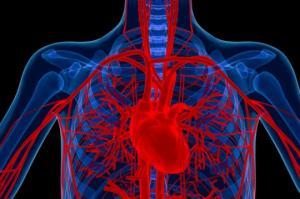 სისხლძარღვებთან დაკავშირებული პრობლემები – სიმპტომები და მკურნალობა. 10 პროდუქტი სისხლძარღვების კედლების გასამაგრებლად