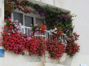 წარმოუდგენლად ლამაზი აივნის ბაღები – 35 კრეატიული იდეა