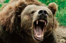 საინტერესო ფაქტები დათვებზე.
