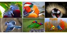 ენით აუწერელი სილამაზის ეგზოტიკური ფრინველები