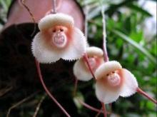 ბუნების საოცრება–უცნაური ყვავილები