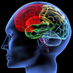 5 ფაქტი ტვინის შესახებ, რომელიც თქვენს ცხოვრებას შეცვლის. ამის ცოდნა მნიშვნელოვანია!