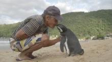 პინგვინის და ადამიანის უჩვეულო სიყვარული – ის ყოველ წელს 8 000 კმ. ცურავს მეგობრის მოსანახულებლად