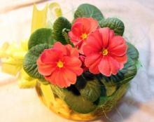 ნატურალური სასუქი ოთახის ყვავილებისთვის