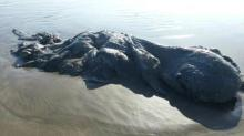 მექსიკის სანაპიროზე ტალღებმა ამოუხსნელი არსება გამორიყა (+ვიდეო)