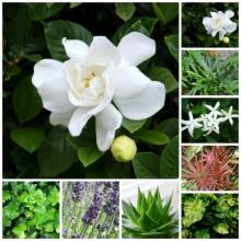 8 მცენარე, რომელთა არსებობა საძინებელში ჯანმრთელობისთვის აუცილებელია