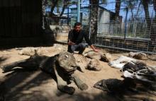 250 დაღუპული ცხოველი აღმოაჩინეს ზოოპარკში დაბრუნებულმა თანამშრომლებმა!