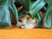 კატებისთვის მავნე, საშიში და შხამიანი სახლის მცენარეები  და პირველი დახმარება მოწამვლის შემთხვევაში