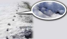 5 რეალური და შოკისმომგვრელი  ფაქტი  დედამიწაზე, რომლებიც ისტორიას არ ავიწყდება