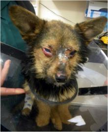 """მოზარდებმა ძაღლი """"ნარკოტიკებით"""" კვებეს, ნახეთ რა დაემართა საბრალო ცხოველს"""