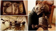 უცნაური არსებების სხეულები აღმოაჩინეს ლონდონის ერთი მიტოვებული სახლის სარდაფში