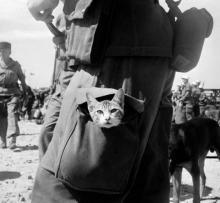 კატები ომში.  პატარა დიდი გმირები