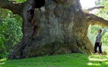 ყველაზე დიდწლოვანი ხეები მსოფლიოში