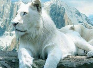 მსოფლიოს ყველაზე ძვირადღირებული 7 ცხოველი!