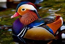 როცა ბუნება  ხუმრობის ხასიათზეა, ანუ უცნაური  ფერის  ცხოველები და ფრინველები