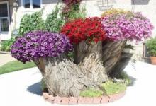 ბაღებისა და ეზოების გაფორმება ხის კუნძის გამოყენებით – 40 საოცარი იდეა