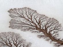 15  გასაოცარი  ოპტიკური  ილუზია, რომელსაც დედა-ბუნება გვთავაზობს...ფოტოშოფი ისვენებს
