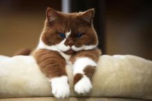 რას ნიშნავს – იყო კატა?  მეცნიერებმა კატებზე დაკვირვების უახლესი შედეგები გამოაქვეყნეს