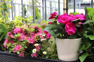 სახლის ლამაზი ყვავილნარის საიდუმლო