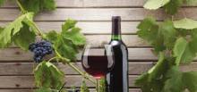 ღვინო -ღვთიური სასმელი