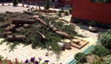 ასწლოვანი ხეების მოჭრა გრძელდება
