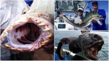 ზუსტად ის მომენტი, როცა დაჭერილი თევზის  წყლიდან ამოყვანის გეშინიათ