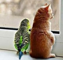 კატების და თუთიყუშების რთული ურთიერთობის 9 მაგალითი