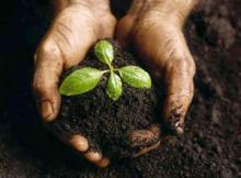 აქვს თუ არა მცენარეს ინტელექტი?