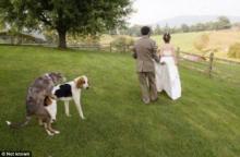 ქორწილის ყველაზე სახალისო და უცნაური ფოტოები