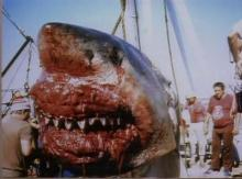 ზვიგენის კუჭის გაკვეთისას გაკეთებული აღმოჩენები