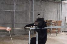 ადამიანის სისასტიკის ამსახველი 12 ფოტო, რომლის ნახვის შემდეგ, ცხოველებს უფრო დააფასებთ