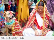 წყევლისგან თავის დასაღწევად, გოგონა ძაღლზე დაქორწინდა!