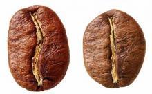 რა განსხვავებაა ყავის ამ ორ სახეობას შორის და როგორ განვასხვავოთ ხარისხიანი ყავა - გაითვალისწინეთ!