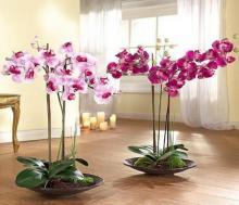 როგორ გავაფორმოთ სახლი და სადღესასწაულო მაგიდა ულამაზესი მცენარეებით – 55 კრეატიული იდეა (ნაწილი II)