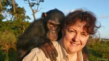 ადამიანებსა და შიმპანზეებს 4 მილიონი წლის განმავლობაში ჰქონდათ სექსი