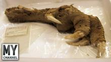 9 საზარელი ფაქტი, რომელიც არქეოლოგებმა აღმოაჩინეს!