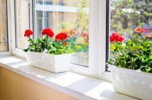 უნიკალური სახლის მცენარე, რომელიც მავნე ბაქტერიებს და პარაზიტებს ებრძვის და ჰაერს ასუფთავებს
